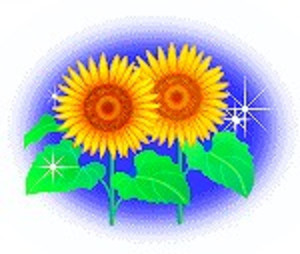 Sbdsunflower71